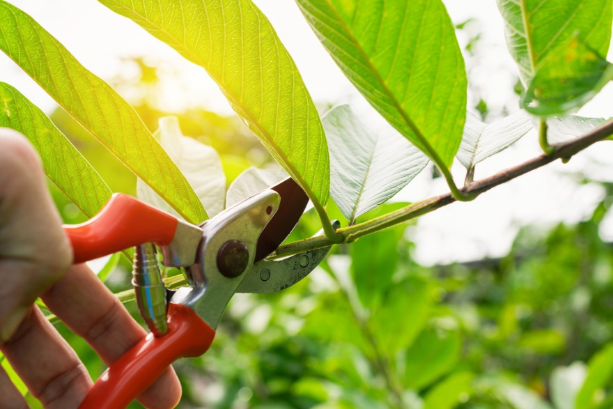 Pruning: How to Scale your Business